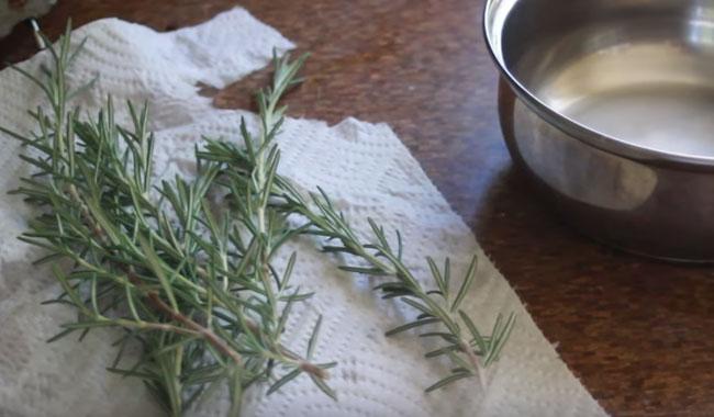 es una hierba aromatica